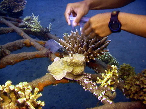 Saving the reefs of Northern Bali