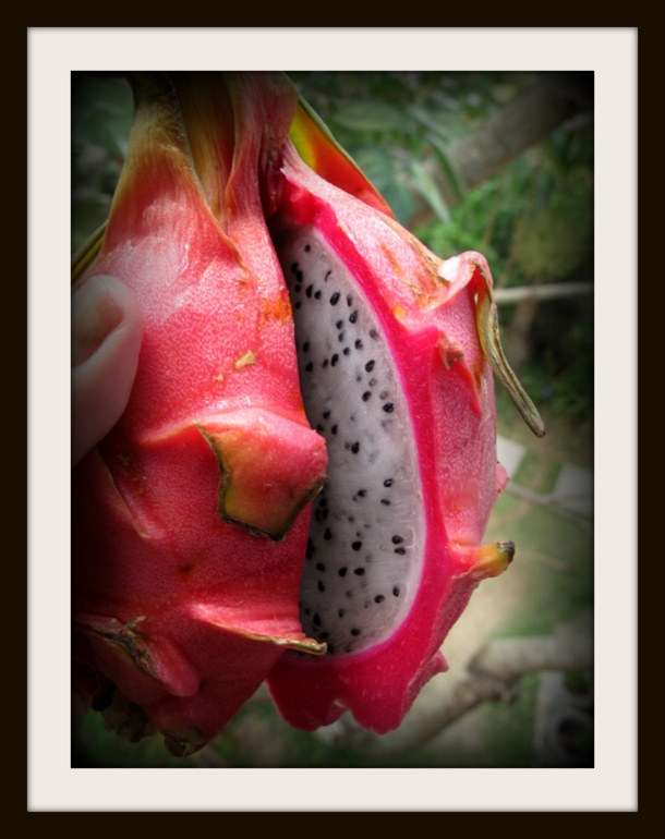 Bali Detox: Dragon fruit